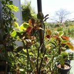アトリエの観葉植物