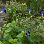 青紫色の花